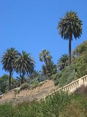 Aug. 24 - Palms