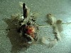 dead bird 4