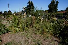 New Garden Plot