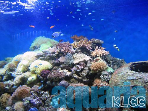 aquaria3