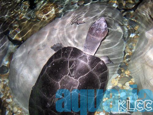 aquaria9