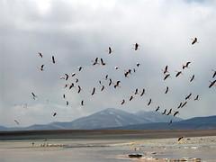 Salar Trip - 35 - Flamingos