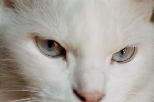 Ojos de Lala