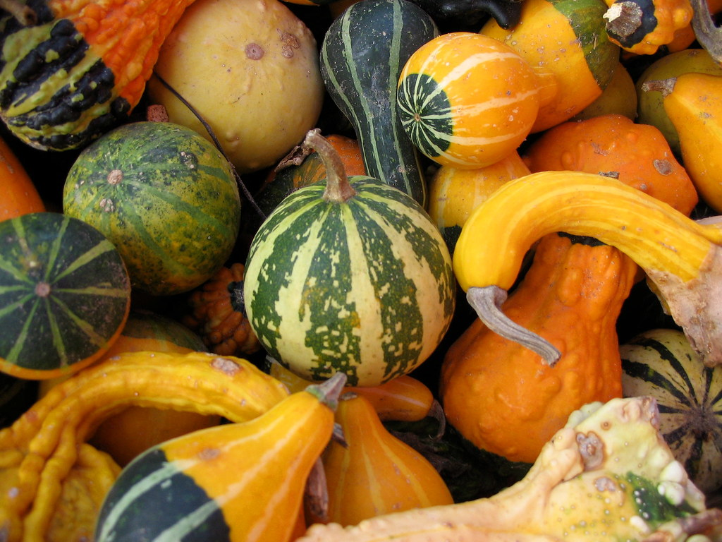 Even More Gourds