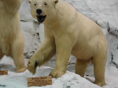 Polar lair