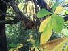 Autum leaves (1 of 2)  in Edinburgh - a garden off Howe Street