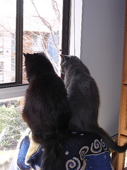Artemis and Ares in the window
