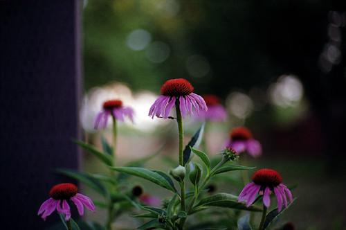 Neat Flower