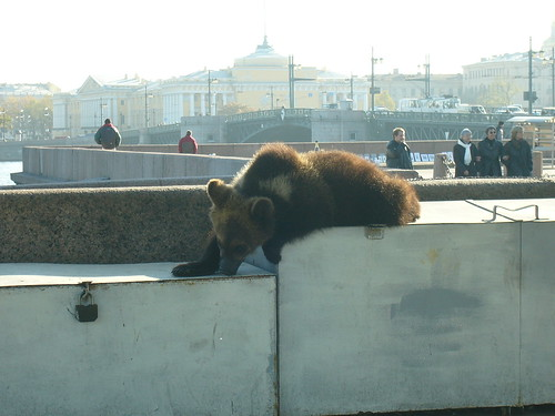 A bear. Near the river in St Petersburg