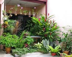 Enjoy the beauty of our tropical garden!