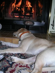 Rocky snoozing by the fire