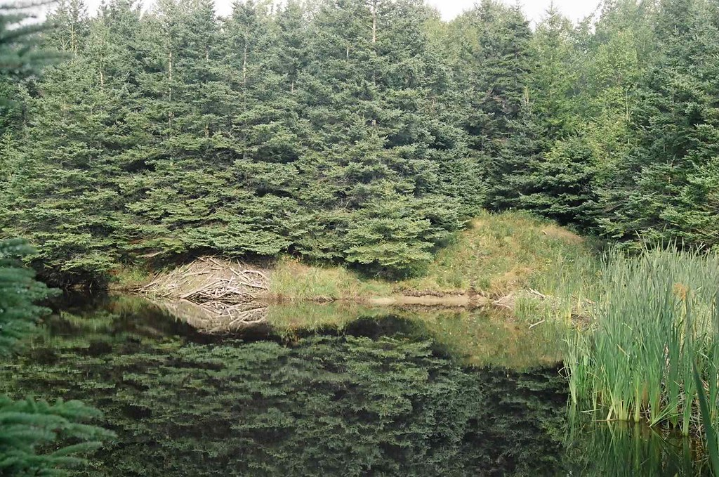 Photo of beaver lodge