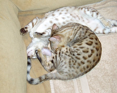 cuddle heap