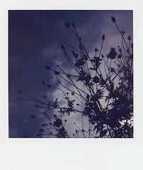 A gloomy flower