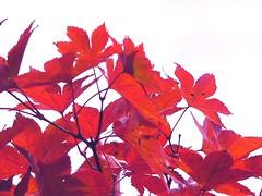fallcolor6