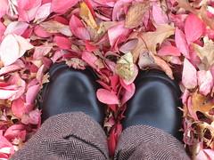 fall / outono