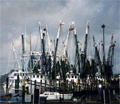 more shrimp boats