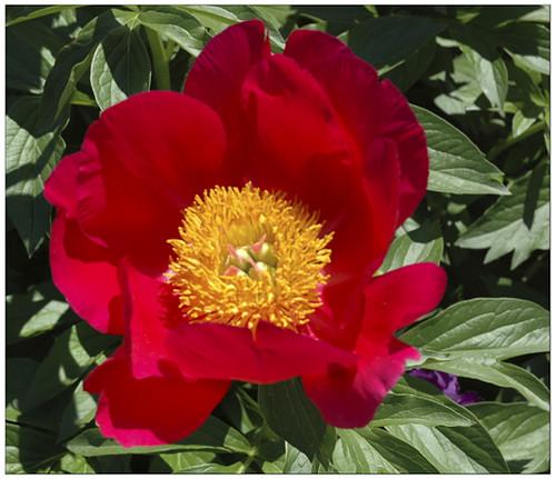 Flowers - Mulvihill's Reel