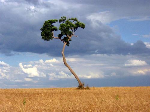 Čudno i usamljeno drveće - Page 2 64790034_27be4cc896
