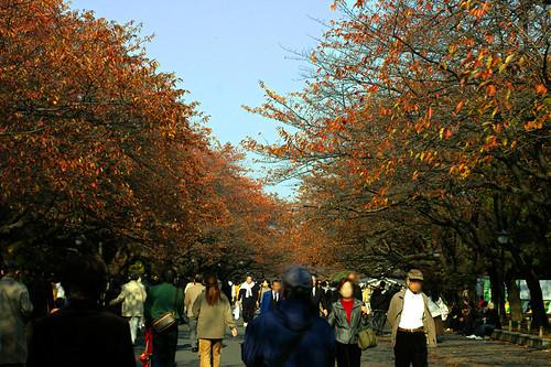 Ueno-park 02