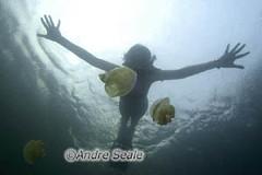 Palau agua-viva 1