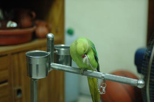 Parrot-04