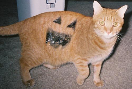 halloween cat - 2004