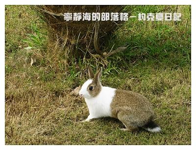 約克夏日記_20060214_凝視遠方