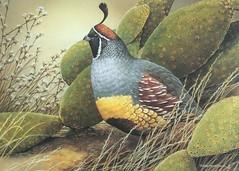 quail_2003_tx