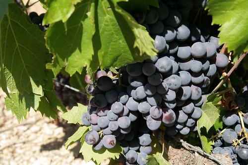 2009-08-05 St Remy de Provence 101