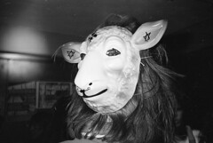 lamb to the slaughter photo by oldmanofthesea