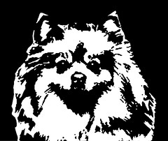 Pomeranian Black & White Stencil Dog Art Print photo by Pupaya