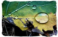 The rain photo by mariannakoutna