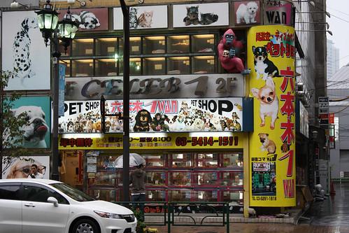 Pet Shop Tokyo Tokyo Pet Shop Photo by