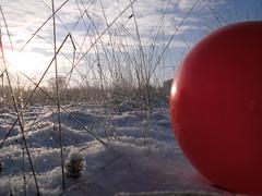 Pics/Art/Red Ball/PICT0714.JPG