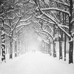 Winter, Strandvägen photo by Hannes R