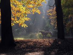 Autumn . photo by Wouter van Wijngaarden
