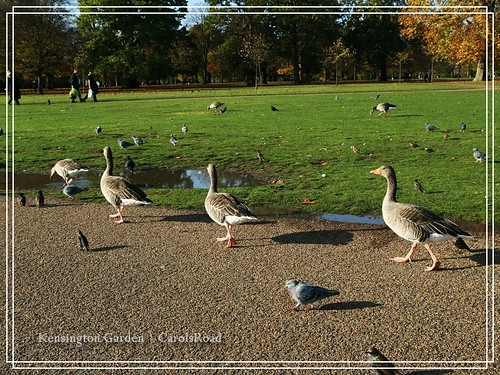 2009-11-07 Kensington Garden 019