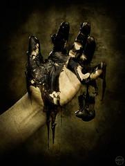 The hand that feeds photo by iiana