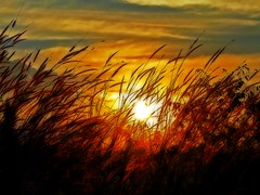 Sun behind the grass photo by JC Patricio Photography