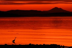 Sunrise Heron Silhouette photo by Brandon Godfrey