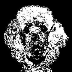Poodle Black & White Stencil Dog Art Print photo by Pupaya