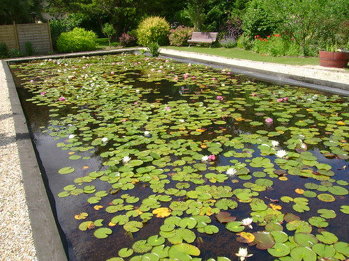 bassin de jardin nenuphar