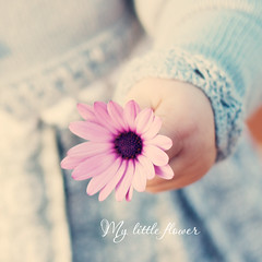 My little Flower :: EXPLORE!! photo by OniXNoiR