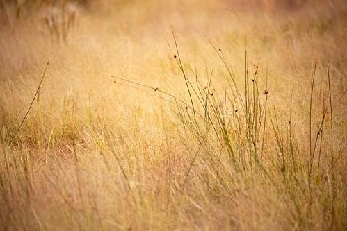 Lost in a Field