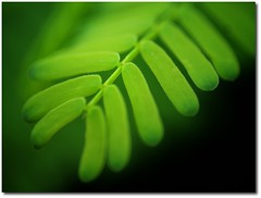 green leaves photo by { pranav }
