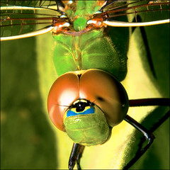 ~ DragonFly Macro / All Sizes ~ photo by ViaMoi