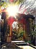 Chinese Garden 15