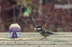 Babo Feeding Bird (20/30) photo by Morphicx
