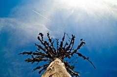 Under the Tree photo by Sergiu Bacioiu